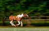 painthorse_8645