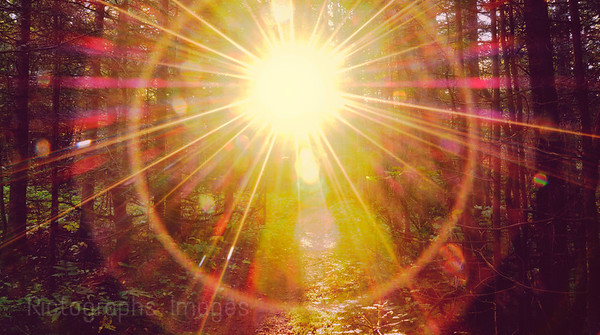 Sun Rays Shining Into The Trees, Rictographs Images