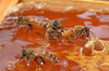 "Bees getting ""stuck"" in honey"