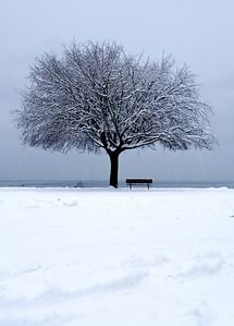 Trees 0018