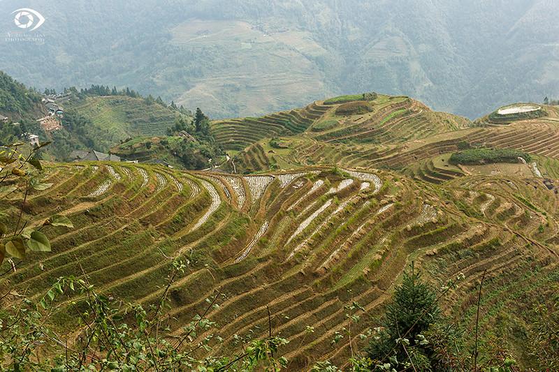 "Longji rice terraces, Guanxi ""China"""