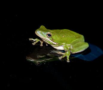 _DSC5733_frog