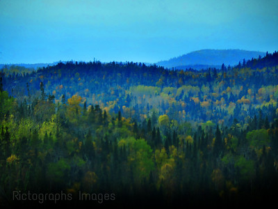 Boreal Forest Of trees, 2018 Rictographs Images