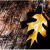 leaf on wood final