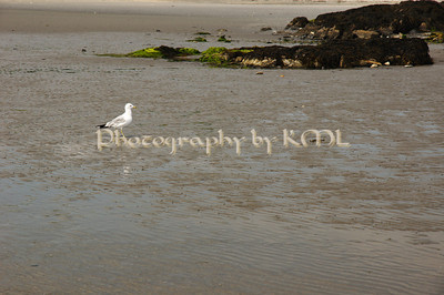 a lone sea gull walking on the beach
