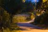 2007 Colorado Trip - Path Behind Hotel (15 sec expose)