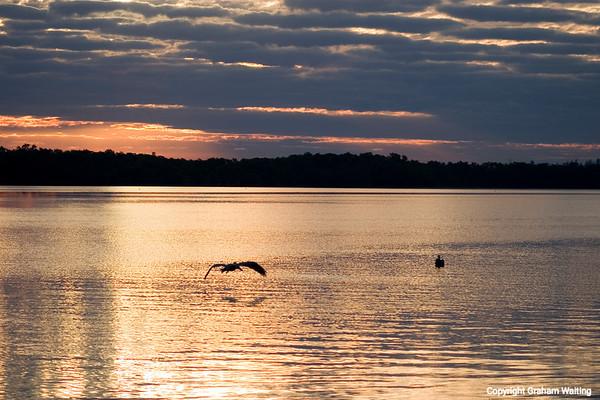Birds flying, sunrise, Florida
