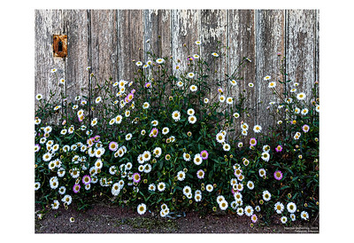 Wall Flowers, Talence, France