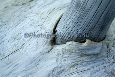 Driftwood Macro