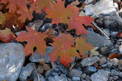 fall colors, logan canyon utah