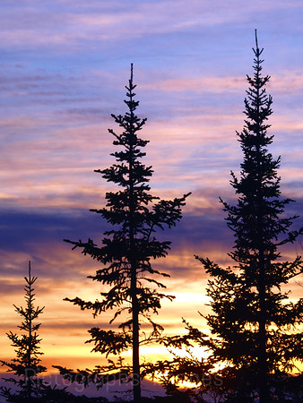 Trees at Sun Down