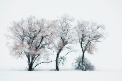 Trees 0015