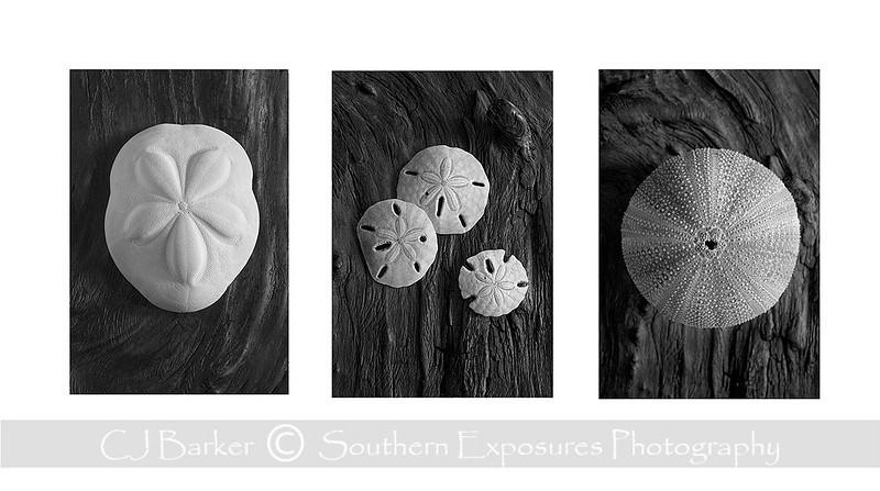 seashell triptych 2