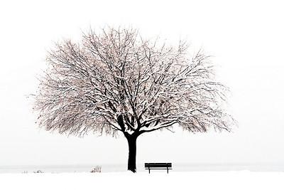 Trees 0017