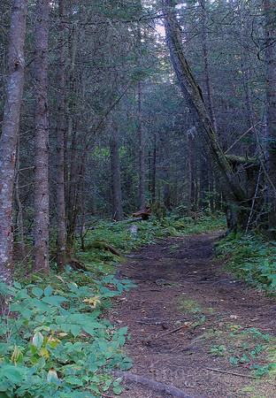 Boreal Forest Trail
