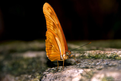 Butterfly Resting on a Rock