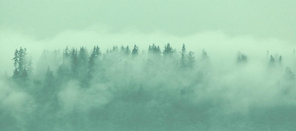 Ridge of Foggy Trees