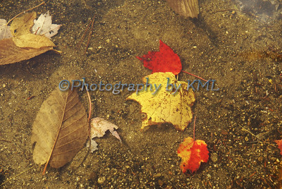 colorful autumn leaves under the water