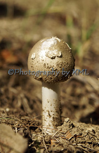 a white mushroom in the dirt