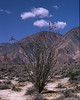 4*Tue, Mar 19, 1968<br /> *People:<br /> Subject: Ocotilla<br /> *Place: Borrego<br /> Activity: <br /> Comments: