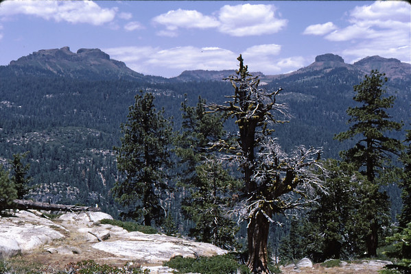 3*Wed, Jul 3, 1968<br /> *People:<br /> Subject: Dardenells, tree<br /> *Place: Stanislaus River<br /> Activity: camp<br /> Comments: