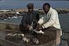 5*Sun, Aug 4, 1968<br /> *People: 2 men<br /> Subject: mess of fish<br /> *Place: berkeley pier<br /> Activity: <br /> Comments: