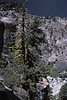 3*Wed, Jul 3, 1968<br /> *People:<br /> Subject: dead tree, down to reservoir<br /> *Place: Stanislaus NF<br /> Activity: camp<br /> Comments: