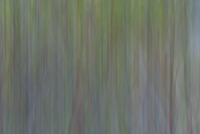 Nature's Abstracts