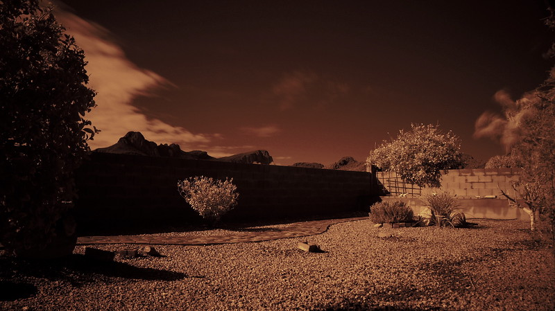 A photo of the back yard using an IR (Infra Red) filter.