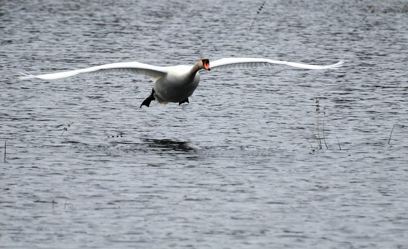 Gliding towards a wet landing.