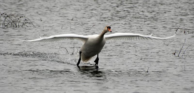 Skimming along the water during landing.
