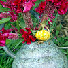 Celosia my wedding flower and what could be the smallest pumpkin ever.. (soo cute( in a Kung Pow kinda voice) ha!)