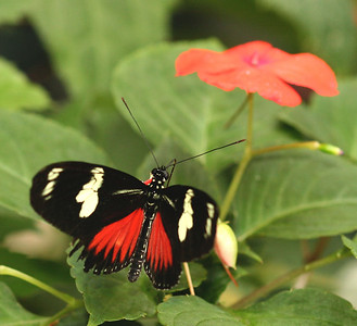 Butterfly exhibit - Nature Museum