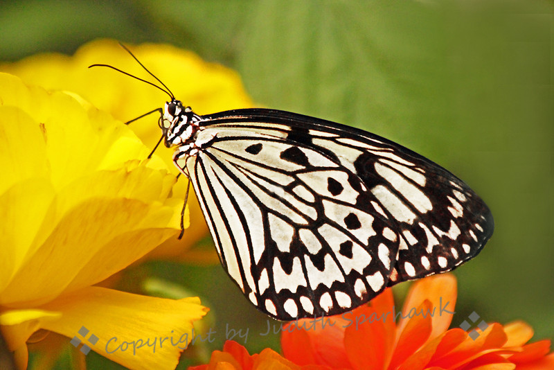Black White and Yellow ~ This image was captured at San Diego Safari Park this last weekend.