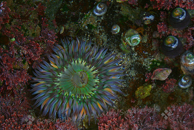 Tidepool Beauty