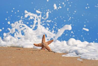 """""""The Starfish"""""""