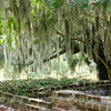 Spanish Moss Everywhere!
