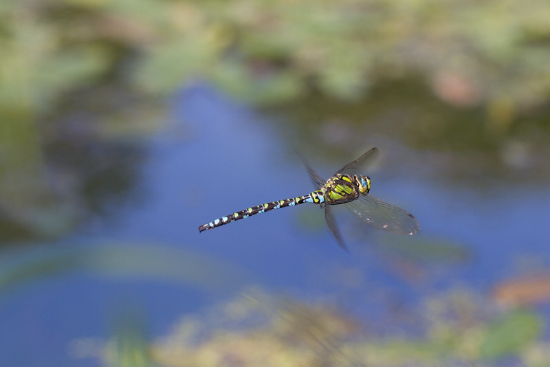 Southern Hawker M