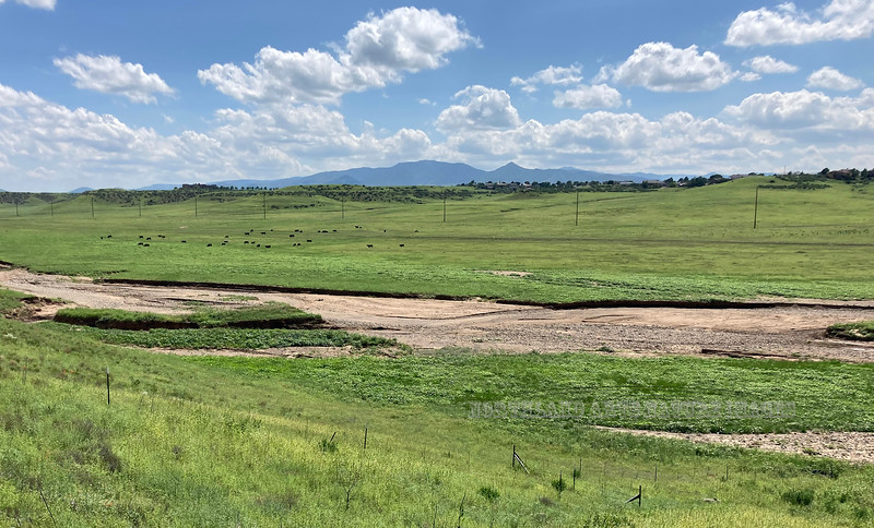 2021.8.19#1x. A scene on the Prairie behind our home after a great monsoon season. Prescott Valley Arizona.