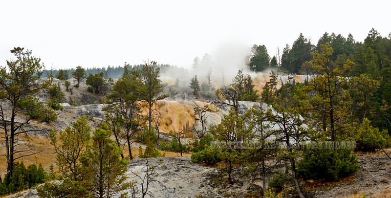 WY-YNP,Cleopatra's Terrace, Mammoth hot Springs, Yellowstone NP, Wyoming.<br /> #913.3471.