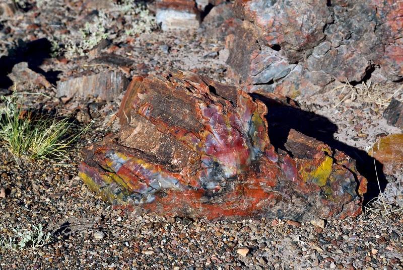 AZ-PFNP, Petrified wood. See image  86 on this page. Petrified Forest, Arizona. #1011.845.