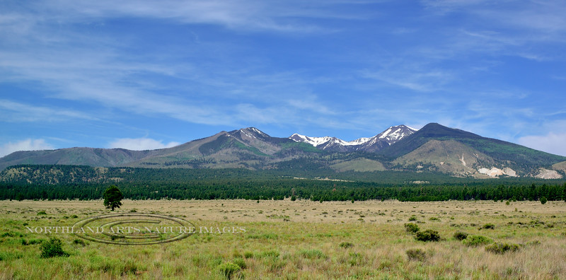 San Francisco Peaks from Bonito Meadow. 2019.6.17#001. Arizona.