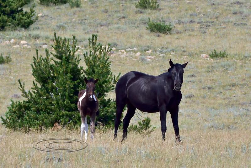 Wild Horse's 2018.7.7#2658. Wyoming.
