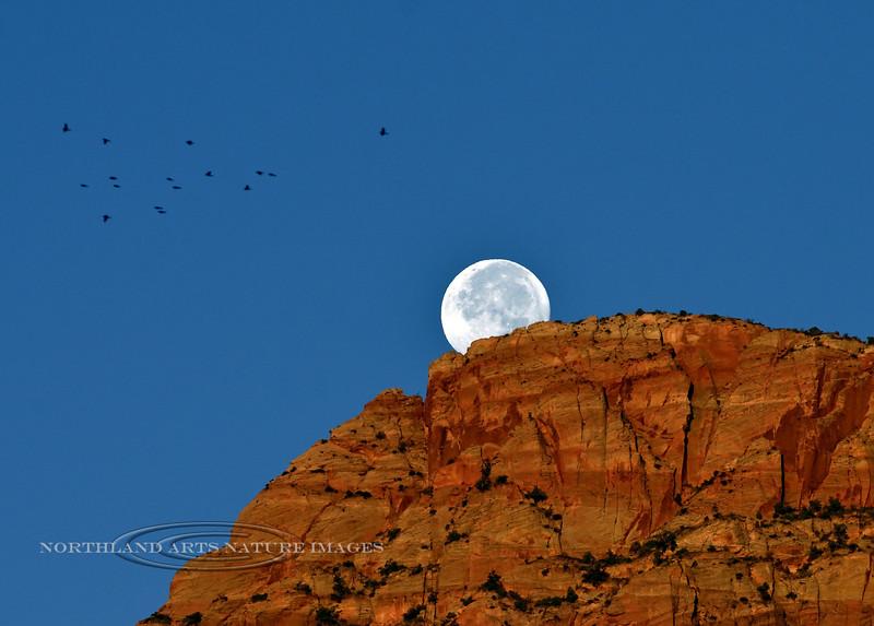 The Moon setting. 2019.10.15#537.  Zion Park, Utah.