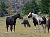 Wild Horse,'s 2018.7.7.#1424. Wyoming.