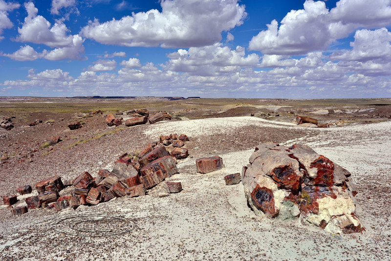 AZ-PFNP, Petrified Forest. Petrified logs. Arizona. #917.796.