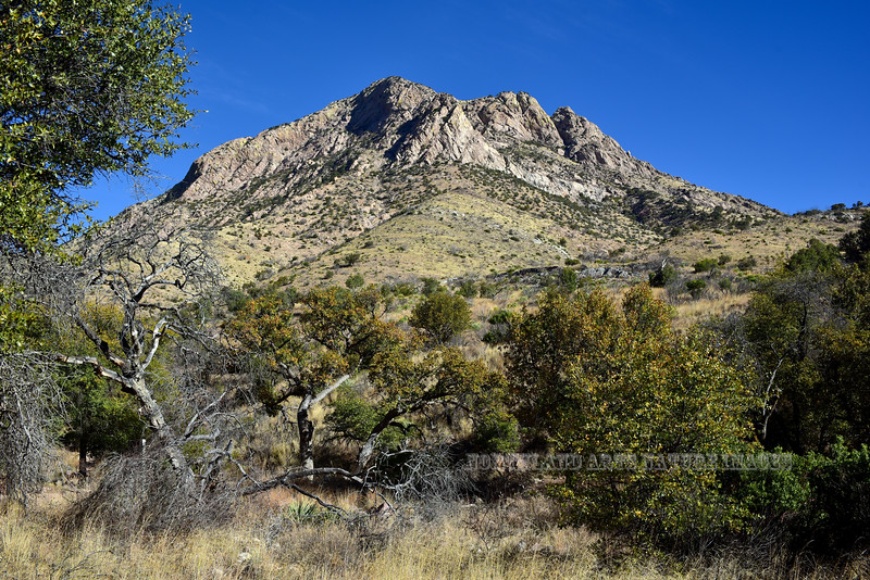 Arizona Oaks 2018.3.21#029. Coroonado Monument in the Huachuca Mountains. Arizona.