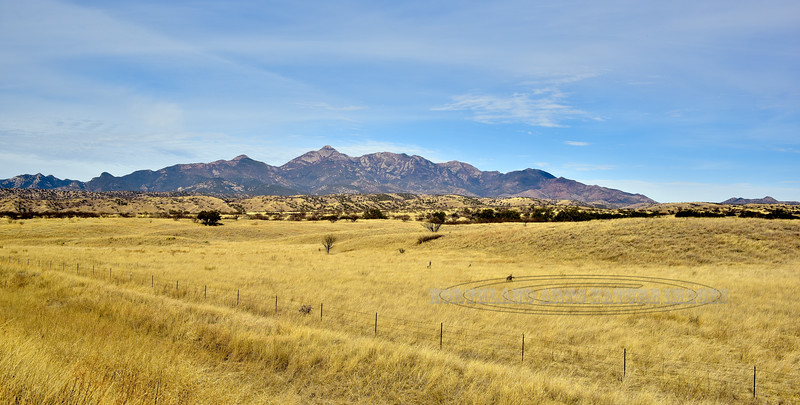 Prairie grasslands2018.3.22#065. Near Sonoita Arizona.