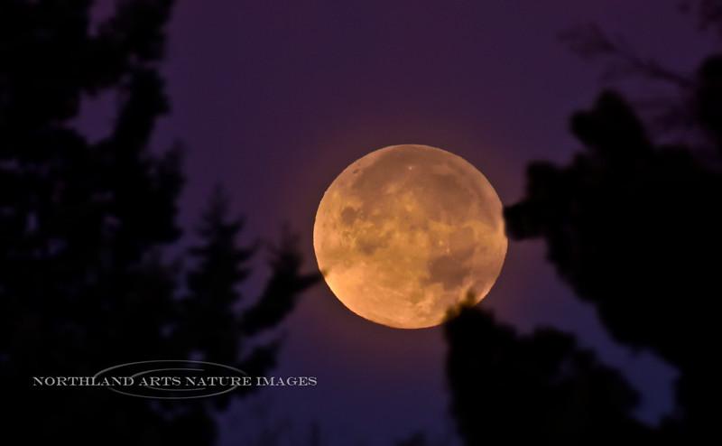 2020.11.30#5761.5. The November Beaver Moon setting in Prescott Valley Arizona.