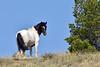 Wild Horse 2018.7.7#2432. Wyoming.